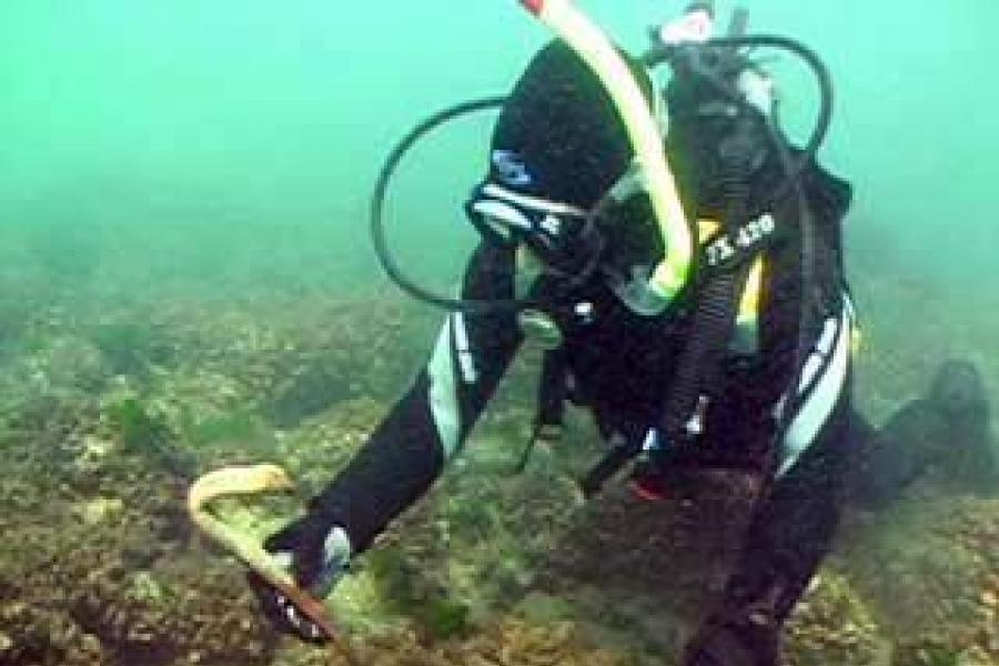 Scuba Diver Center Bucuresti